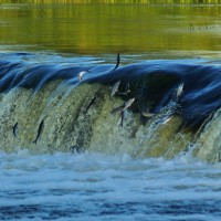 Letonya'da Yaşam – II